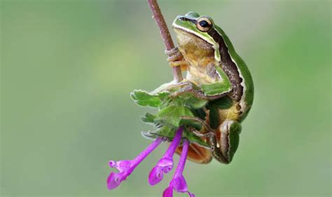 frog photographed swinging  vine  tarzan  turkey nature news expresscouk