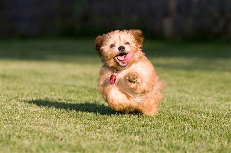 puppy running we puppies fit radio workout musicfit radio workout
