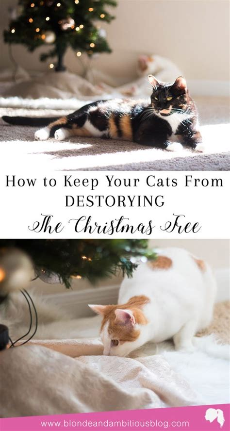 how to keep cats out of the christmas tree how to keep your cats away from your tree ambitious
