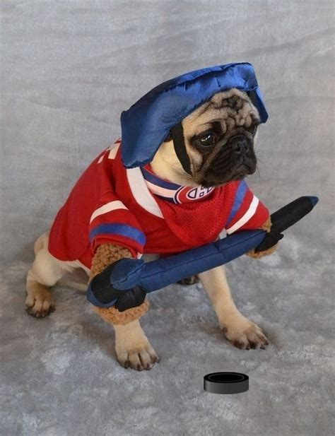 pug player 128 best images about pug costumes on happy canada day