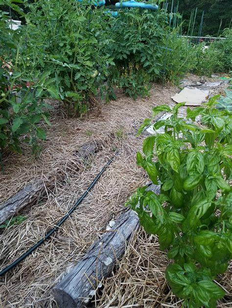 Weed Barrier Alternatives To Plastic And Landscape Fabric Barrier For Vegetable Garden