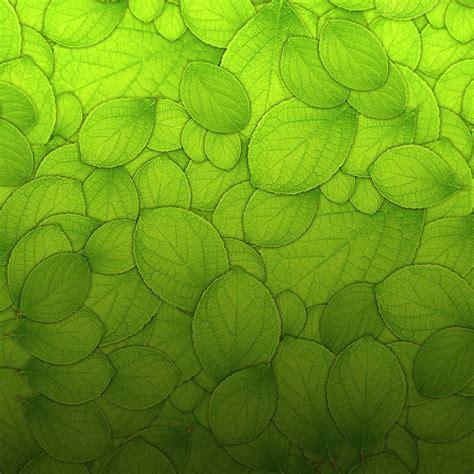 textured wallpaper green leaves texture ipad wallpaper