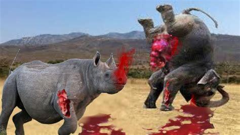 tiere beim decken الفيل مقابل الكركدن المعركة الحقيقية جروب لكل مباراة