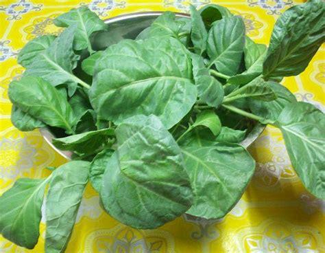 10 Gram Benih Biji Bibit Bayam Belang jualan benih tanaman semua menjadi pakej oktober rm30