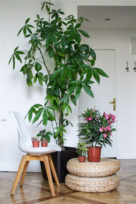 plants for apartments urban jungle bloggers my plant gang airbnb apartment in