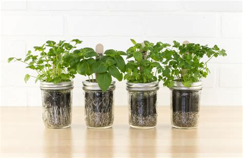 mason jar herb garden kit diy indoor herb garden project