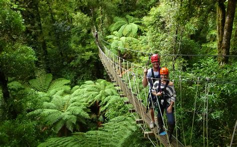 rotorua canopy tours in summer zealand s only
