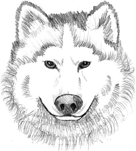 coloring page of a wolf s face realistic wolf coloring pages to print coloring home