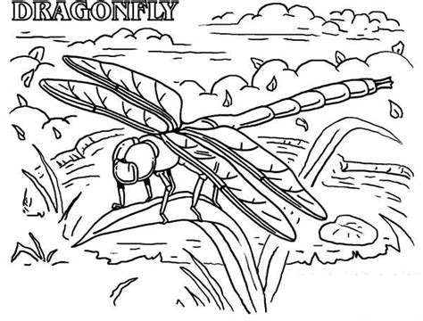 jungle insects coloring pages dragonfly rainforest insect animals coloring page