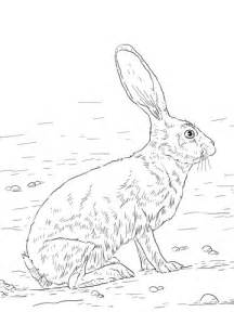 coloring pages jack rabbit 301 moved permanently