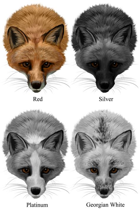 fox colors domestic fox colors by noellembrooks on deviantart