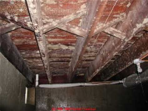 how to clean black mold in basement white mold in basement white mold in basement white