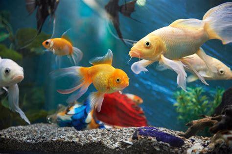 fish stores  aquarium fish