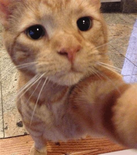 Apps For Decorating Your Home 17 Awesome Animals Selfies That Will Make You Laugh Out