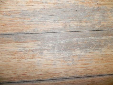 laminate floor care and maintenance
