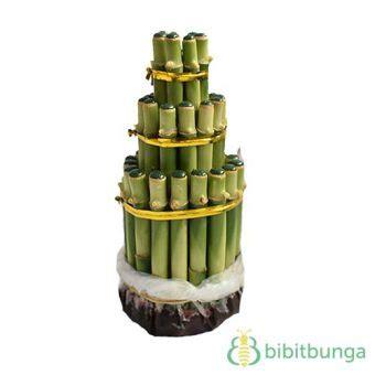 Tanaman Hias Bambu Hoki tanaman bambu hoki pagoda 3 tingkat hijau jual tanaman