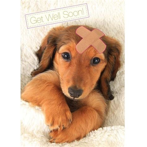 when to get puppy get well soon card www imgkid the image kid has it