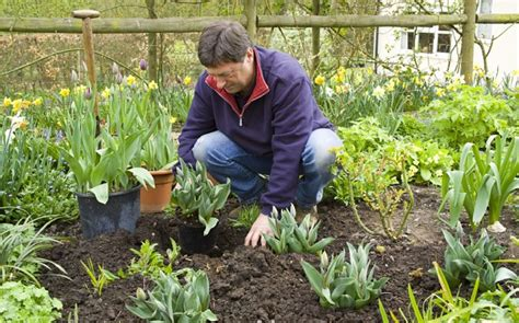 Green Fingered Waitrose Launches Gardening Range Telegraph Waitrose Flower Garden