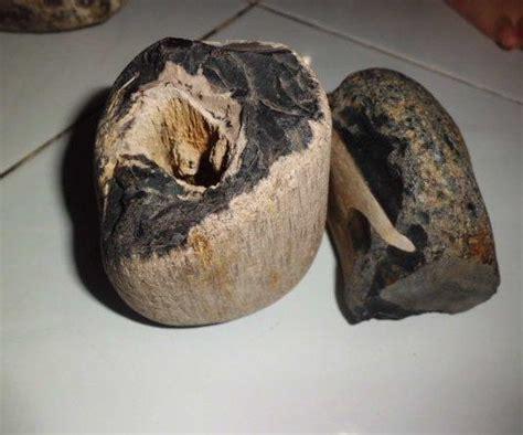 Batu Akik Galeh Kelor Asem batu galih kelor asli