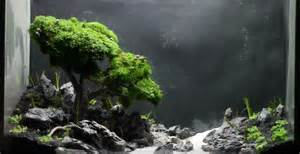 Tutorial Aquascape Step By Step How To Make Bonsai Aquarium This Is