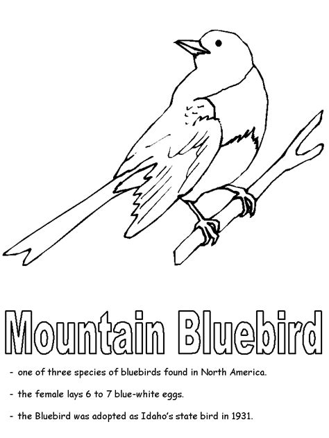 mountain bluebird coloring page