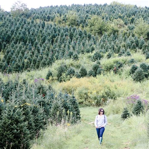 colossians 2 7 north carolina christmas tree farm how