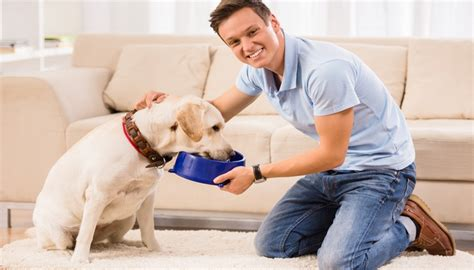 feeding puppies 7 tips on how to feed dogs to deal with and prevent allergies