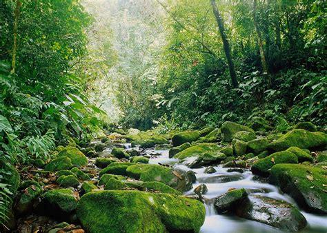 visit monteverde cloud forest costa rica audley travel