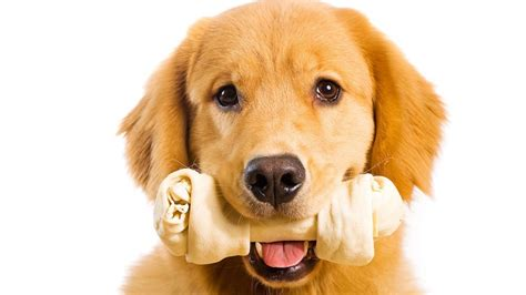 can dogs eat bones 15 cutest puppies that will melt your barking royalty