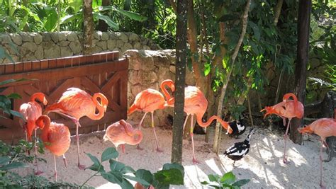 explore xcaret   kids travelpulse