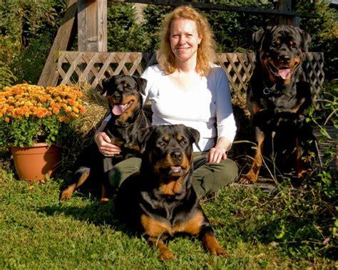 rottweiler breeders in ct wellslands rottweilers rottweiler breeder rottweiler puppies rottweiler stud