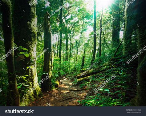 deep forest green deep green forest with mossy woods and ferns sunlight is