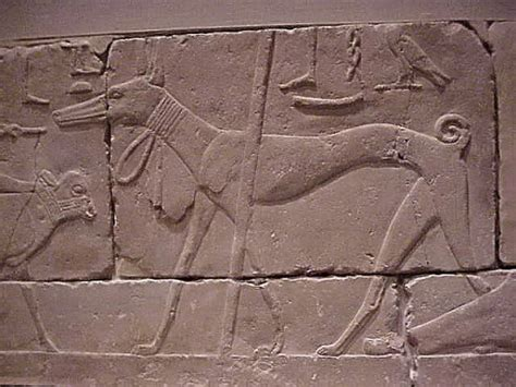 ancient dogs 5 ways ancient egyptians were more obsessed their dogs than you