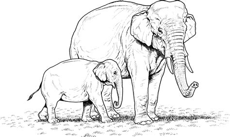 realistic elephant coloring page free elephant coloring pages