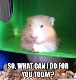 Hamster Meme - evil hamsters related keywords suggestions evil