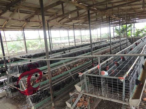 poultry house design   layer  chicken cage