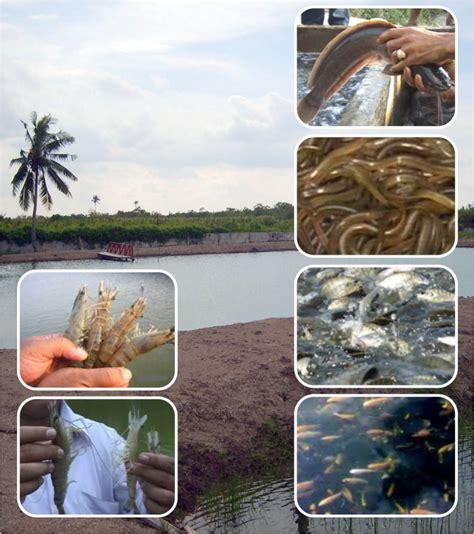 Pupuk Organik Cair Untuk Tambak pupuk cair organik nutrisi organik d i grow untuk perikanan