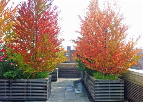 NYC Terrace Design: Roof Garden, Bluestone Paver Patio