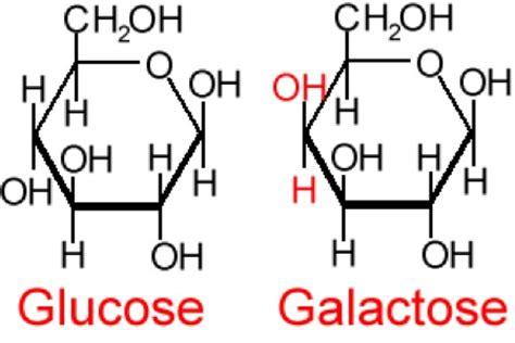 carbohydrates ring structure pr 228 vention vor demenz und alzheimer abnehmen