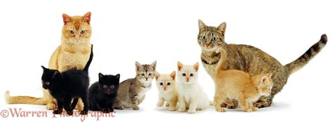 colourful cat family photo wp00391