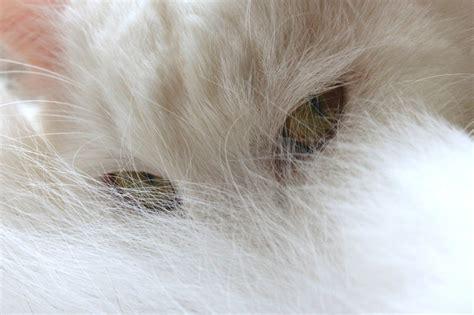 vacuum  pet hair  allergies allergyconsumerreview