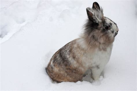 Pics Of Rabbit Hutches Caring For Your Rabbits During The Winter Pets4homes