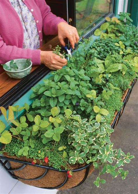 window box garden vegetables 9 herb garden ideas how to plant four generations one roof