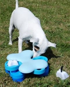 mental stimulation for dogs the importance of mental stimulation for your top tips