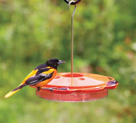 oriole feeders nectar wiring diagrams repair wiring scheme
