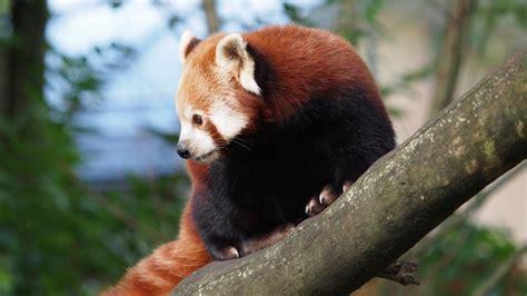 imagenes animales y plantas en peligro de extincion fotos de animales en peligro de extinci 211 n im 225 genes