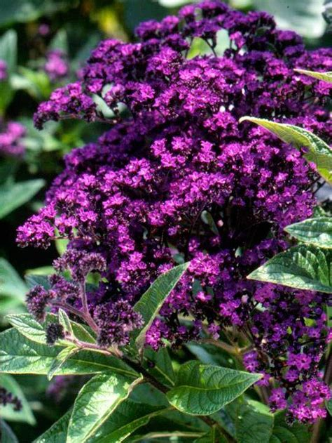 purple flower garden purple flowers purple and flower on pinterest