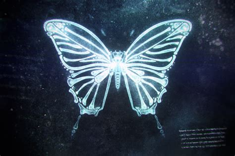 x ray butterfly on behance