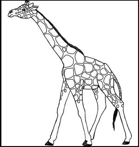 imagenes de jirafas para ninos imagenes de jirafas para dibujar faciles imagenes para