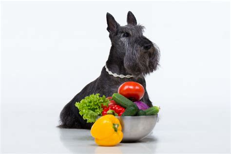are tomatoes for dogs can dogs eat tomatoes